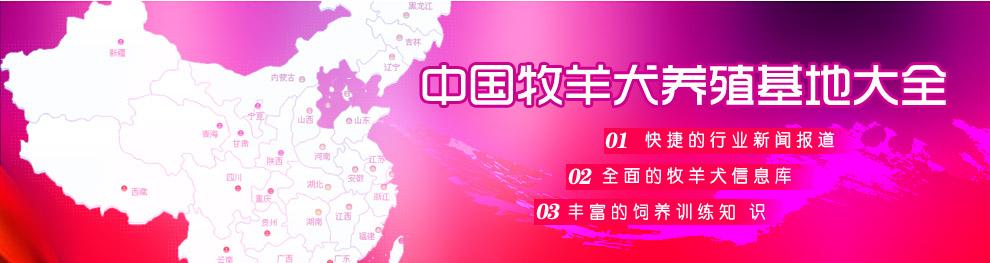 中国牧羊犬养殖基地大全